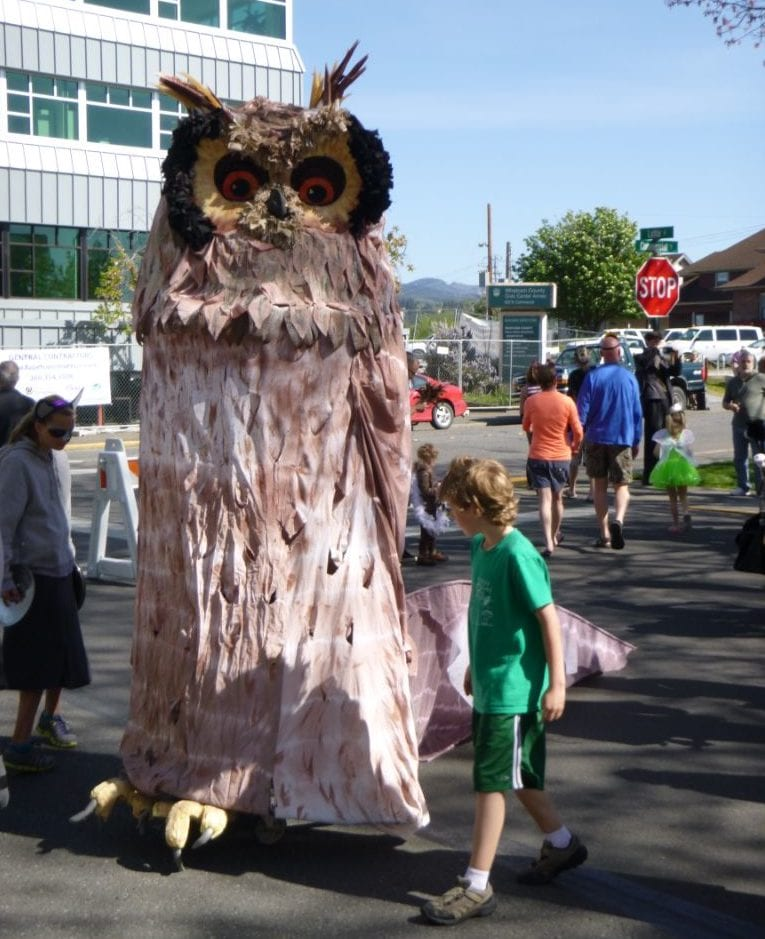 procession of the species bellingham whatcom tourism owl