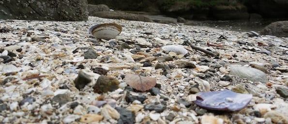 Clamshell Beach