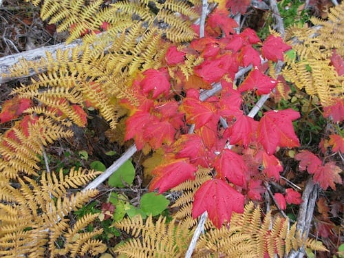 North Cascades colors