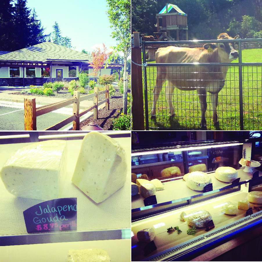 Appel Farms, Whatcom County Farm Tour, Farm to Fork, Cheesemaker, Dairy Farms