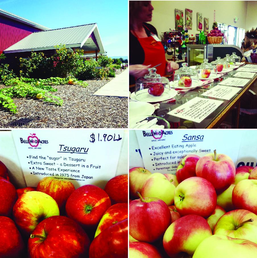 Bellewood Acres, Apple Farm, Whatcom County Farm Tour, Farm to Fork, CIder, Apples, Distillery