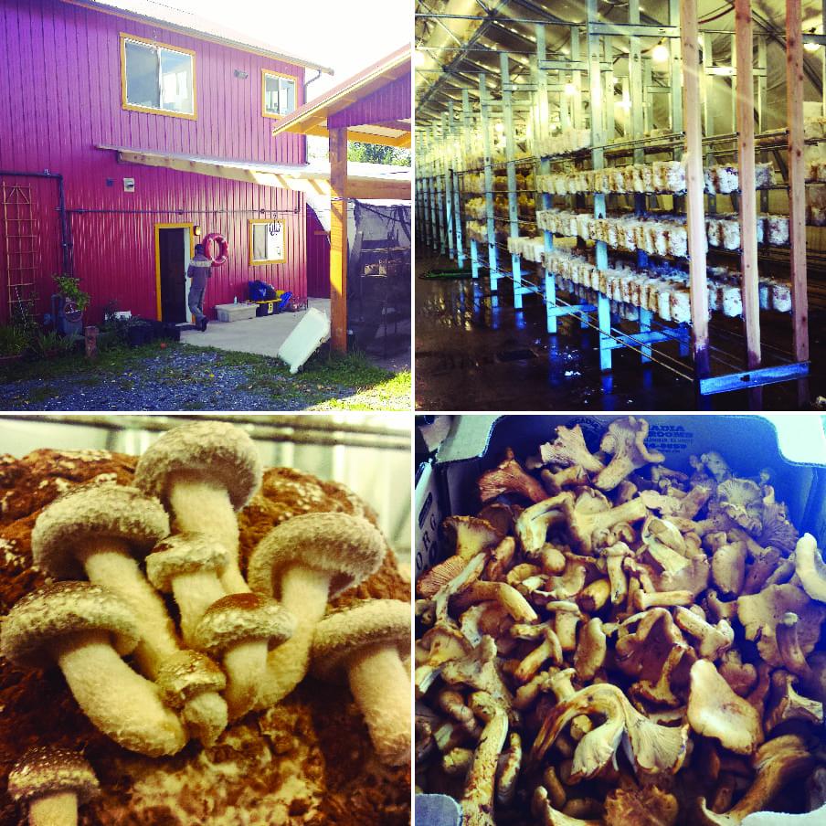 Cascadia Mushrooms, Mushroom Farm, Whatcom County Farm Tour, Farm to Fork, Shitake, Oyster, Organic Mushrooms