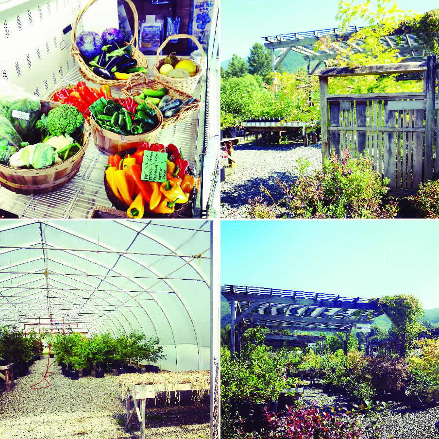 Cloud Mountain Farm Center, Apple Farm, Whatcom County Farm Tour, Farm to Fork, Grapes, Pears