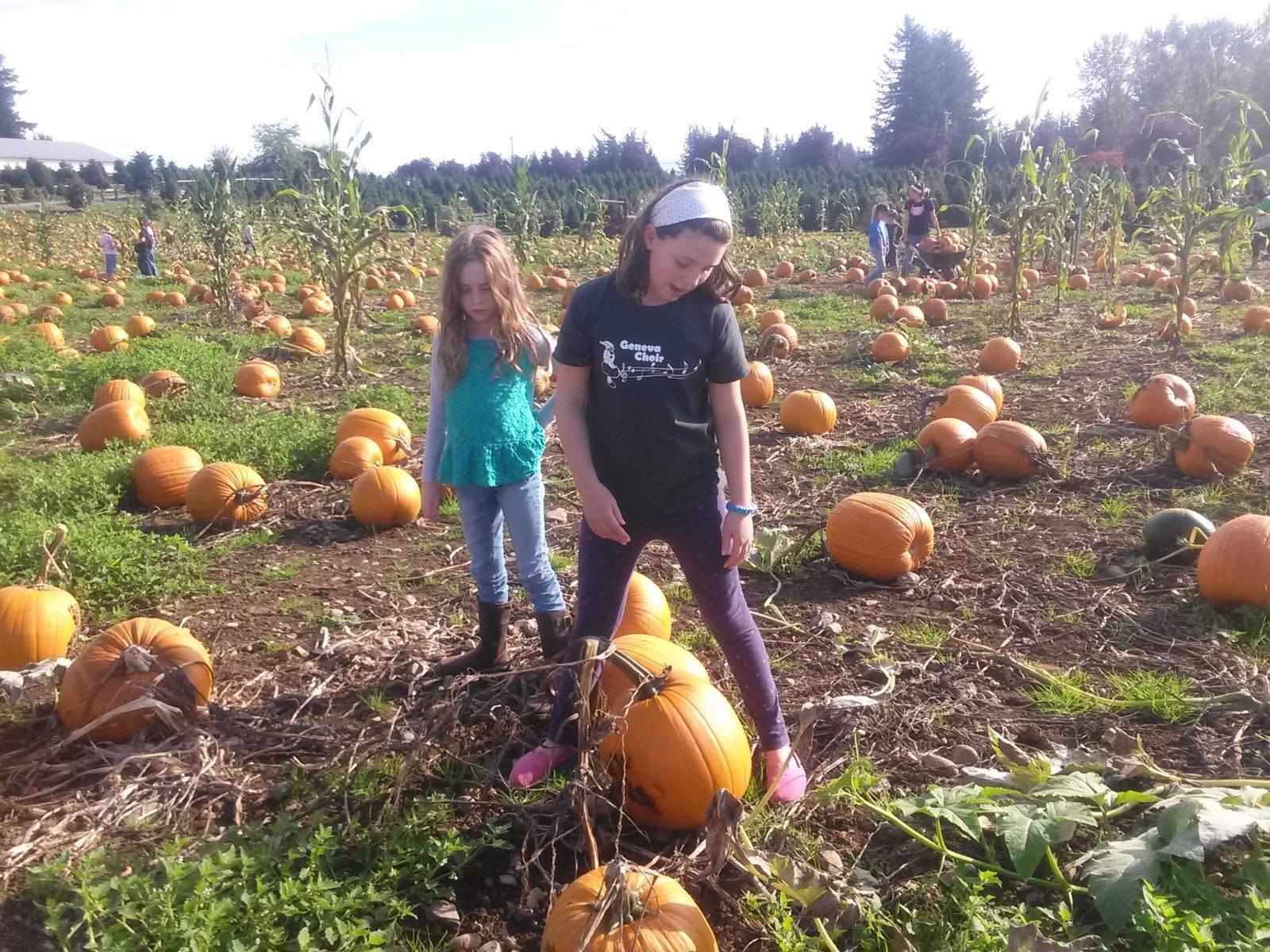 Girls pick out a pumpkin at Stoney Ridge Farm, Everson