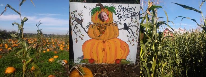 Fall scenes from Stoney Ridge Farm, Everson