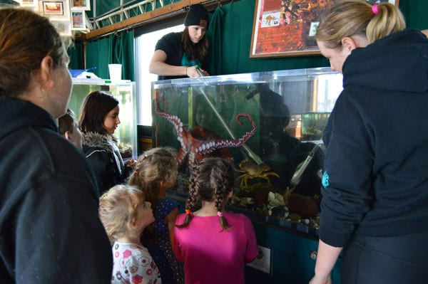 Crowd for Roxy the octopus, Marine Life Center, Bellingham