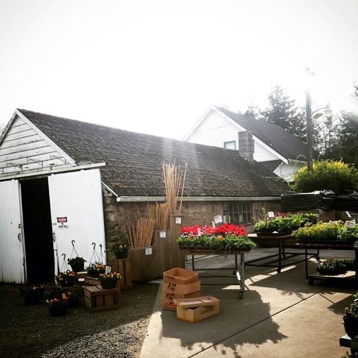 Joe's Gardens, Bellingham Garden Centers, Vegetable Starts, Gardening Supplies, Bedding Plants, Flowers