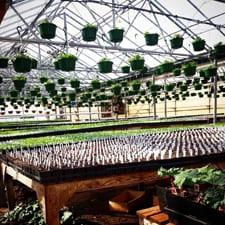 Joe's Greenhouse 2