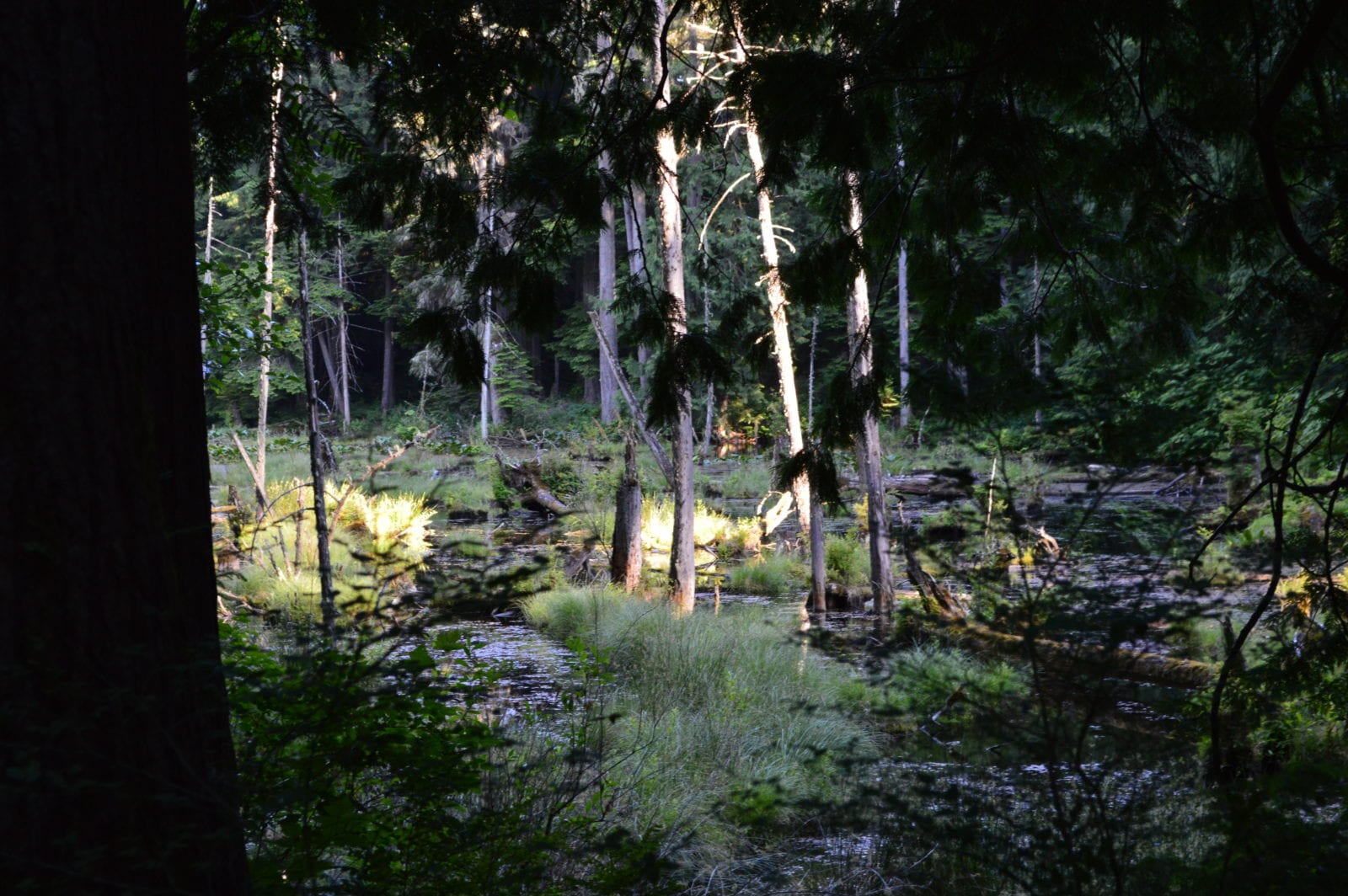 Beaver Pond, Stimpson Nature Reserve, Bellingahm