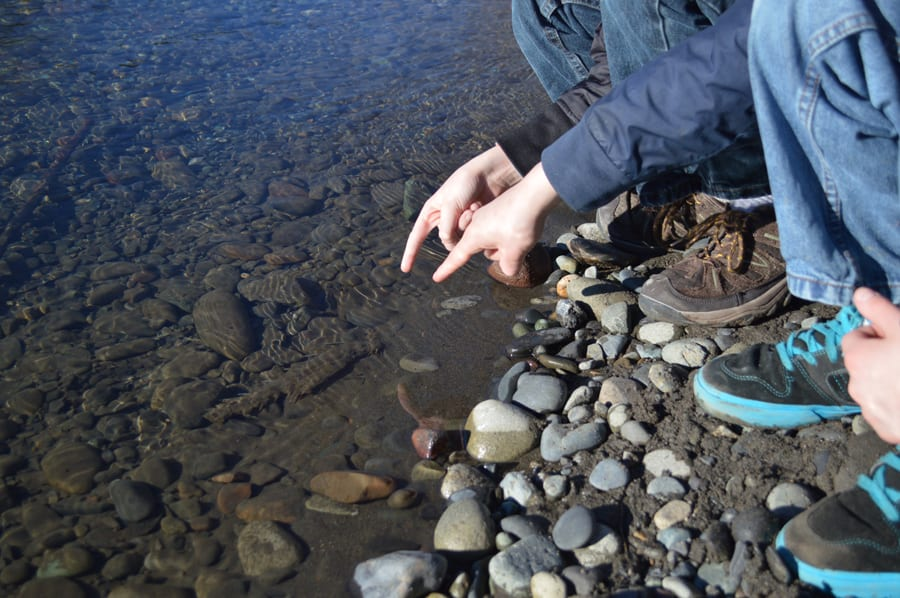 Boys point to fish carcass along Nooksack River.