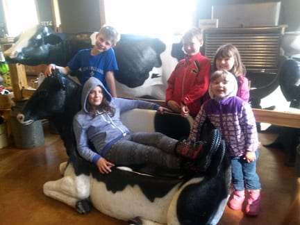 """The """"cow couch"""" at Appel Farms."""