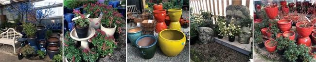 My Garden Nursery, Plants, Garden Center, Bellingham, Trees