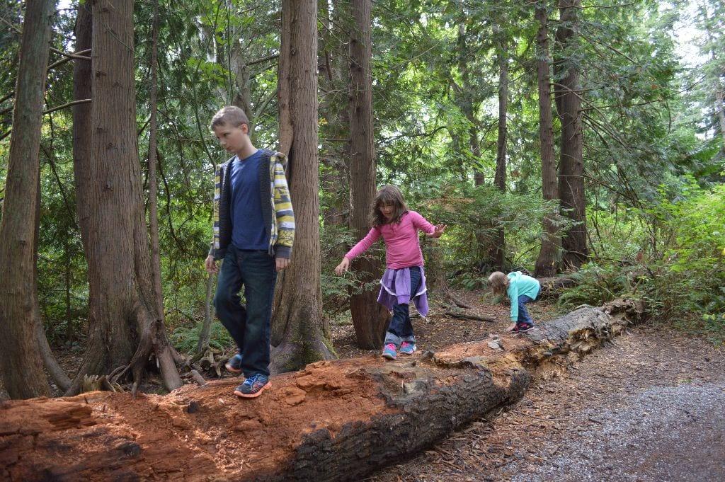 Three kids balance on a log, Connelley Creek Trail