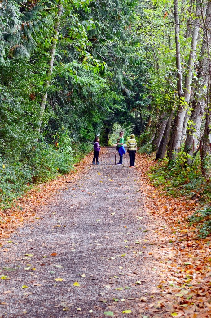 Connelly Creek Trail, Bellingham