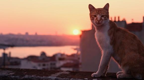 Kedi, Pickford Film Center, documentary, cat