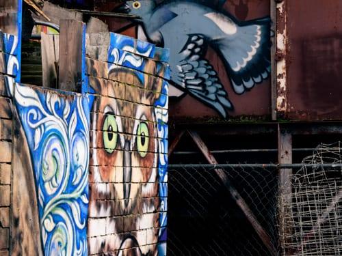 bird alley Shawn Cass street art graffiti Bellingham Whatcom