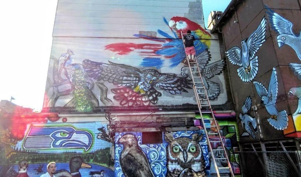 Shawn Cass street art graffiti Bellingham Whatcom bird alley