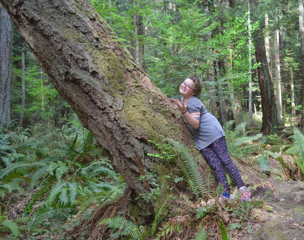 Little girl and a big tree, Hundred Acre Wood, Bellingham