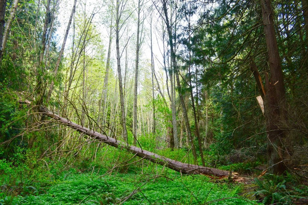 Hundred Acre Wood, Bellingham