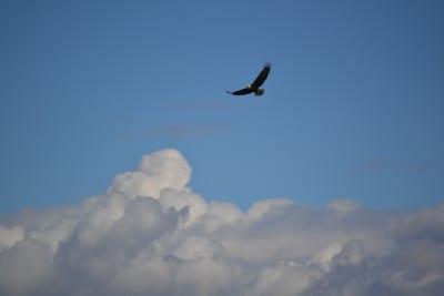 Bird Watching Bellingham Whatcom County