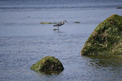 Bird Watching Bellingham Whatcom County2