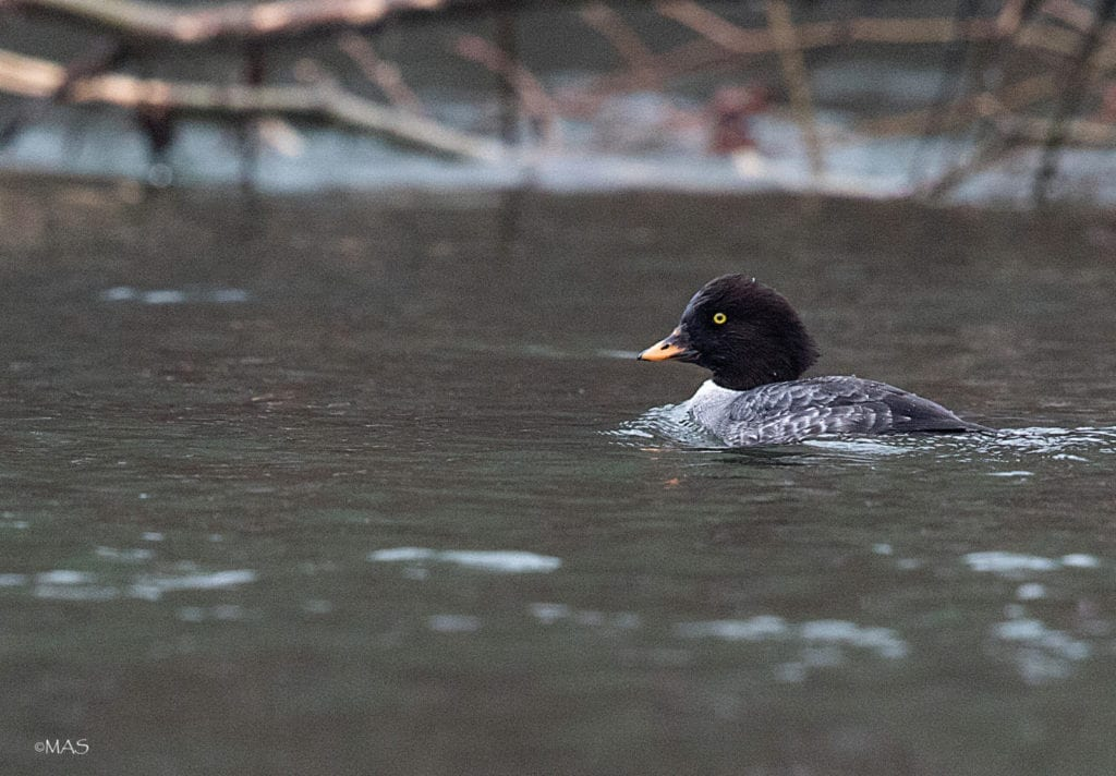 Bird Watching Bellingham Whatcom County4