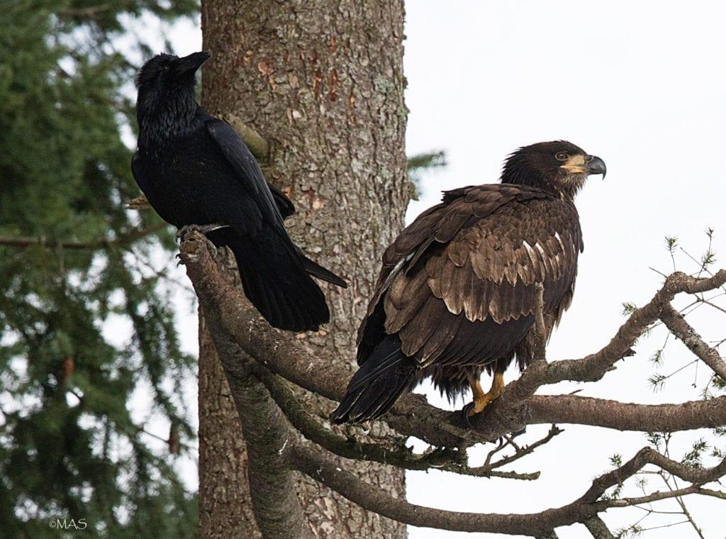 Bird Watching Bellingham Whatcom County5