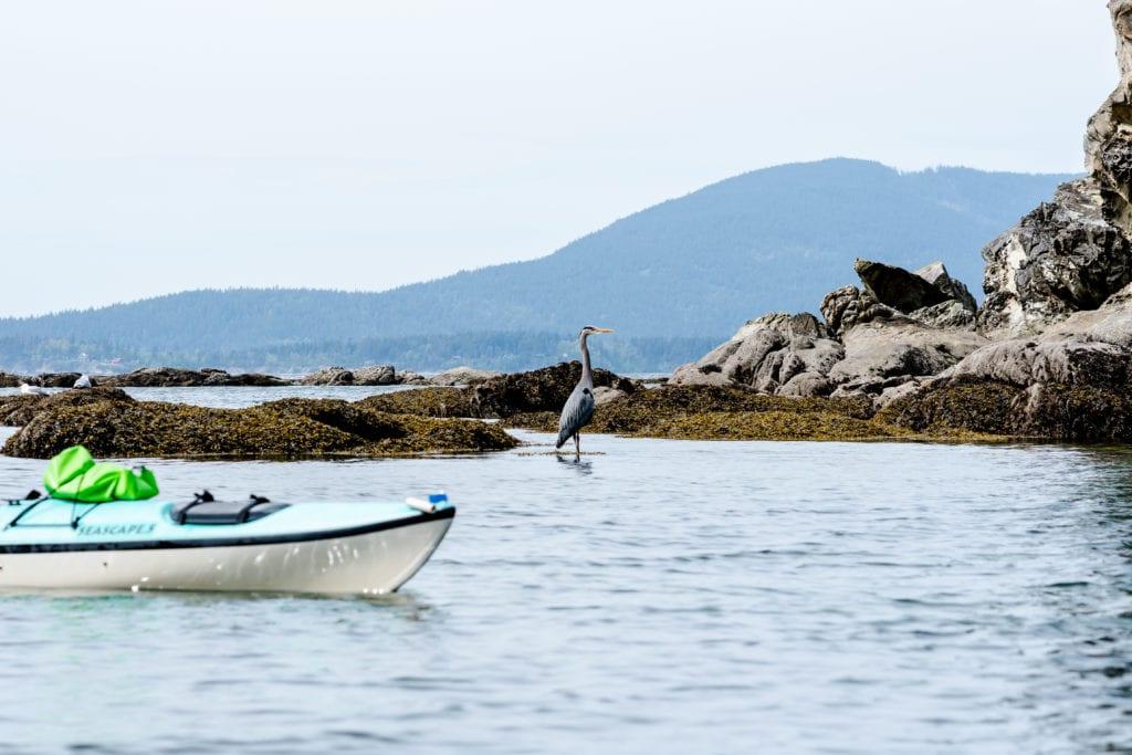 Moondance Sea Kayaking Bellingham Larrabee 59