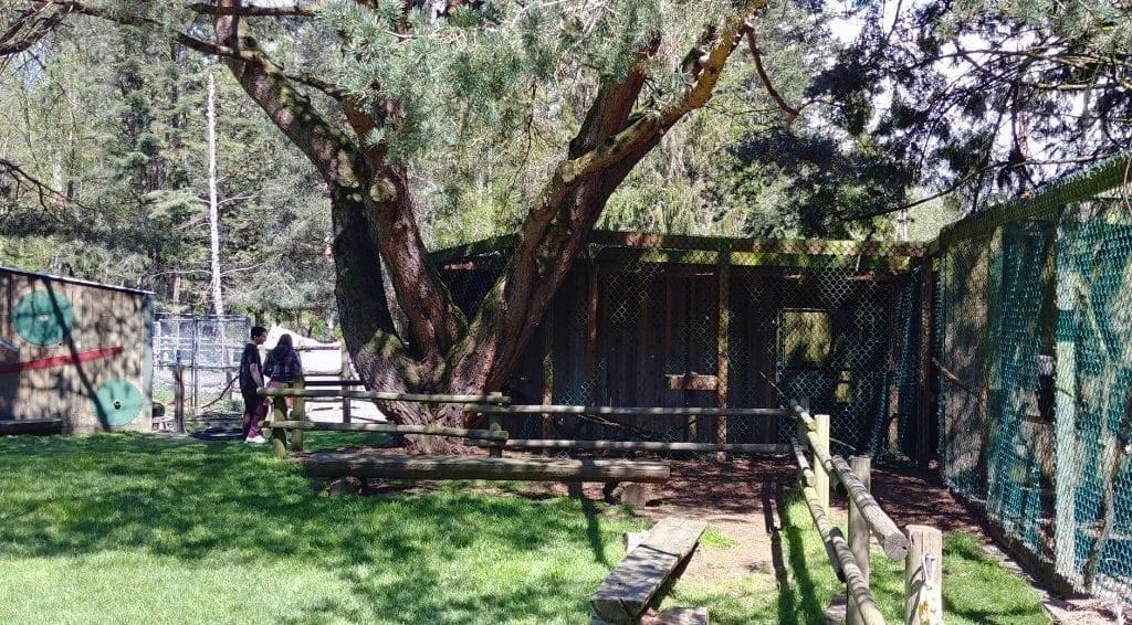 Sardis Raptor Center Eagle Enclosure Ferndale.2jpg