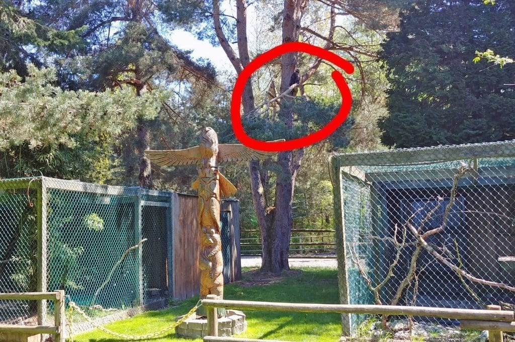 Sardis Raptor Center Eagle Enclosure Ferndale.3jpg