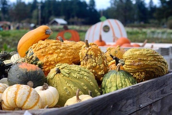 Triple Wren Farms Pumpkin Season