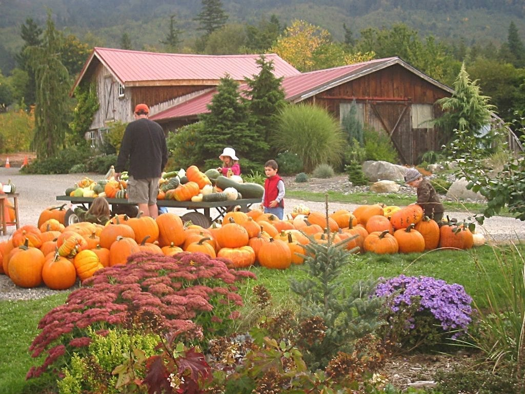 Pumpkins Cloud Mountain Farm Center