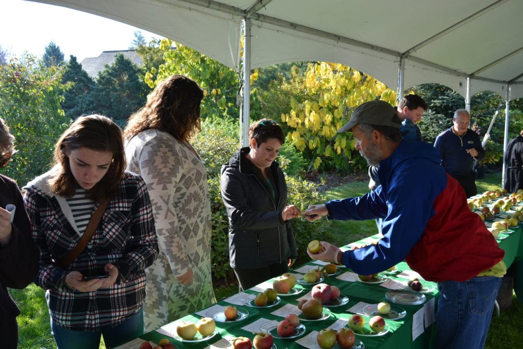 Fall Fruit Festival Cloud Mountain Farms Bellingham Whatcom County