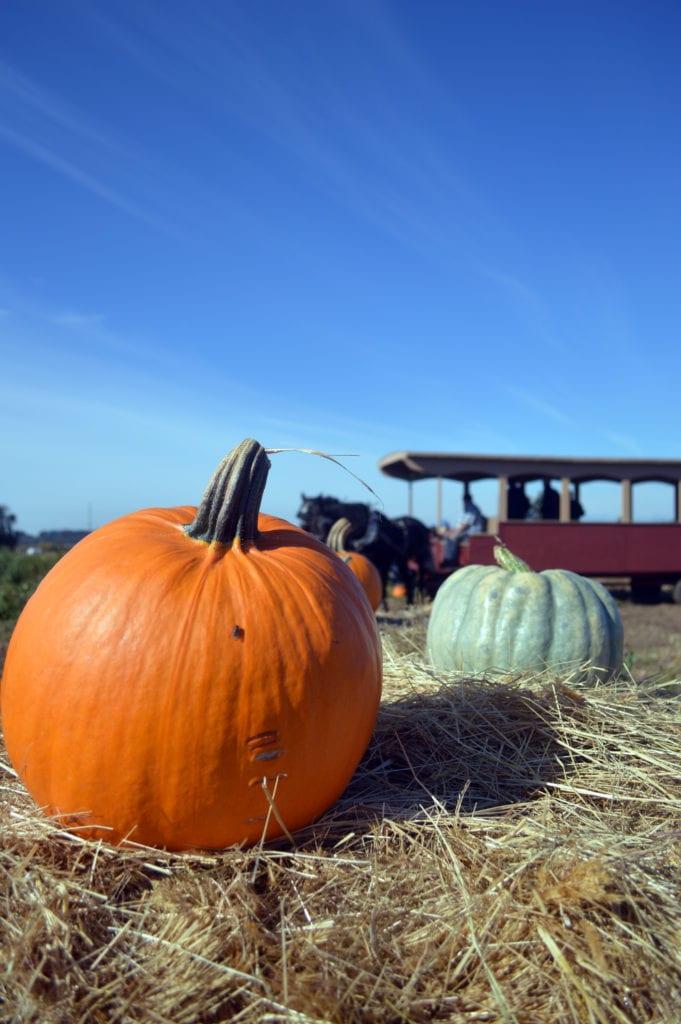 Dan Cramers Western Town Pumpkin Patch Bellingham Whatcom County (8)