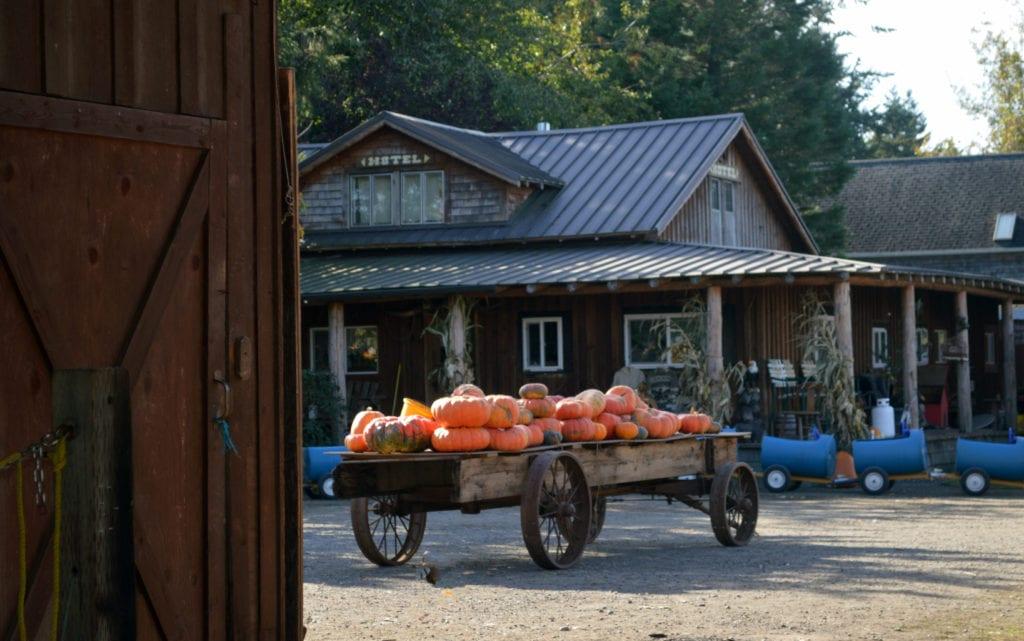 Dan Cramers Western Town Pumpkin Patch Bellingham Whatcom County (9)