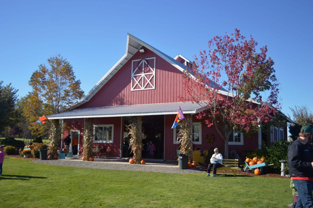 Stoney Ridge Farm Pumpkin Patch Bellingham Whatcom County (12)