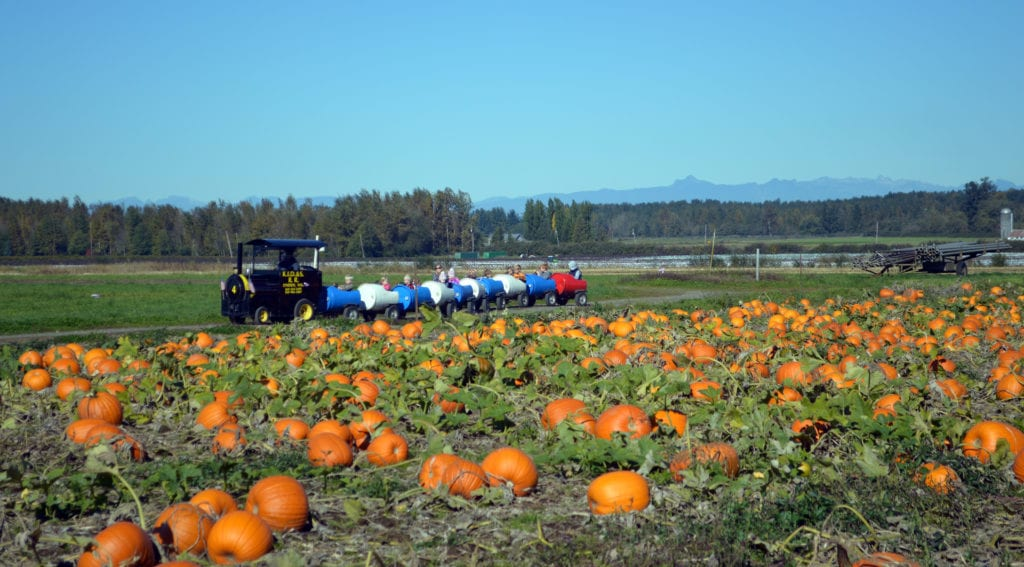Stoney Ridge Farm Pumpkin Patch Bellingham Whatcom County (2)