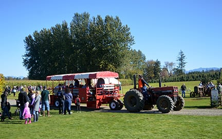 Stoney Ridge Farm Pumpkin Patch Bellingham Whatcom County (3)