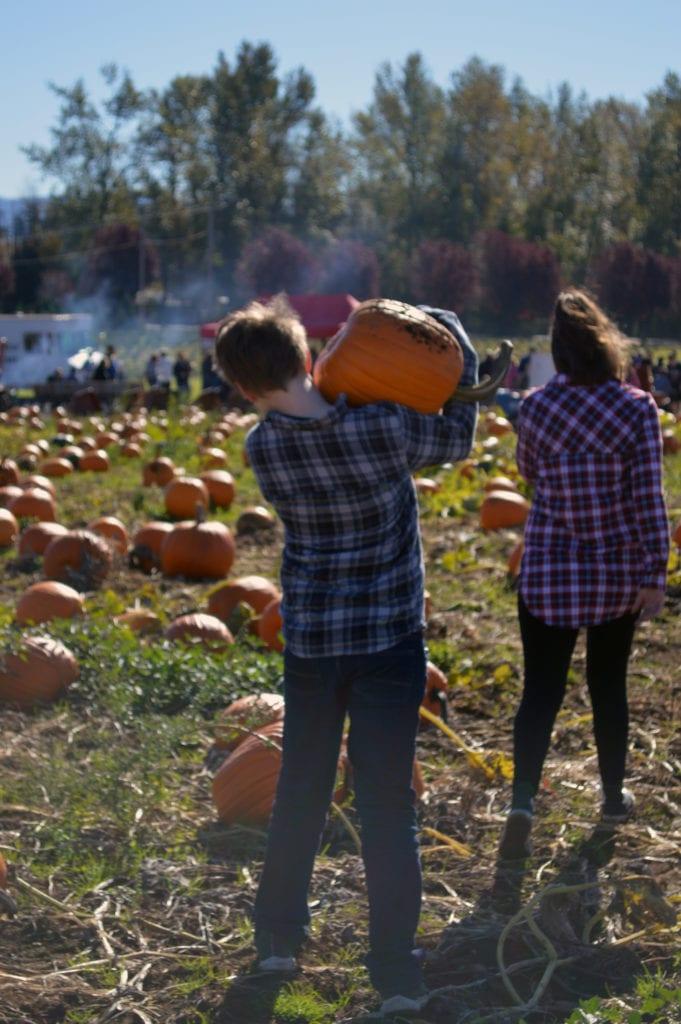 Stoney Ridge Farm Pumpkin Patch Bellingham Whatcom County (4)