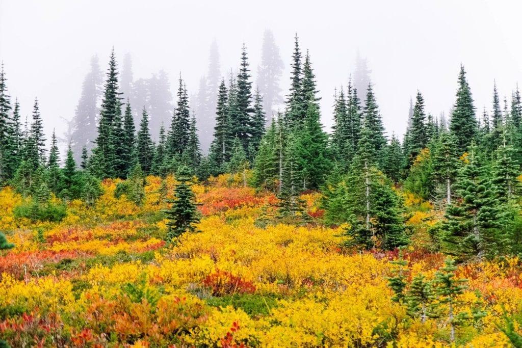 Washington State Road Trip Coastal Drives Mountain Highs — Road Trip Usa 1