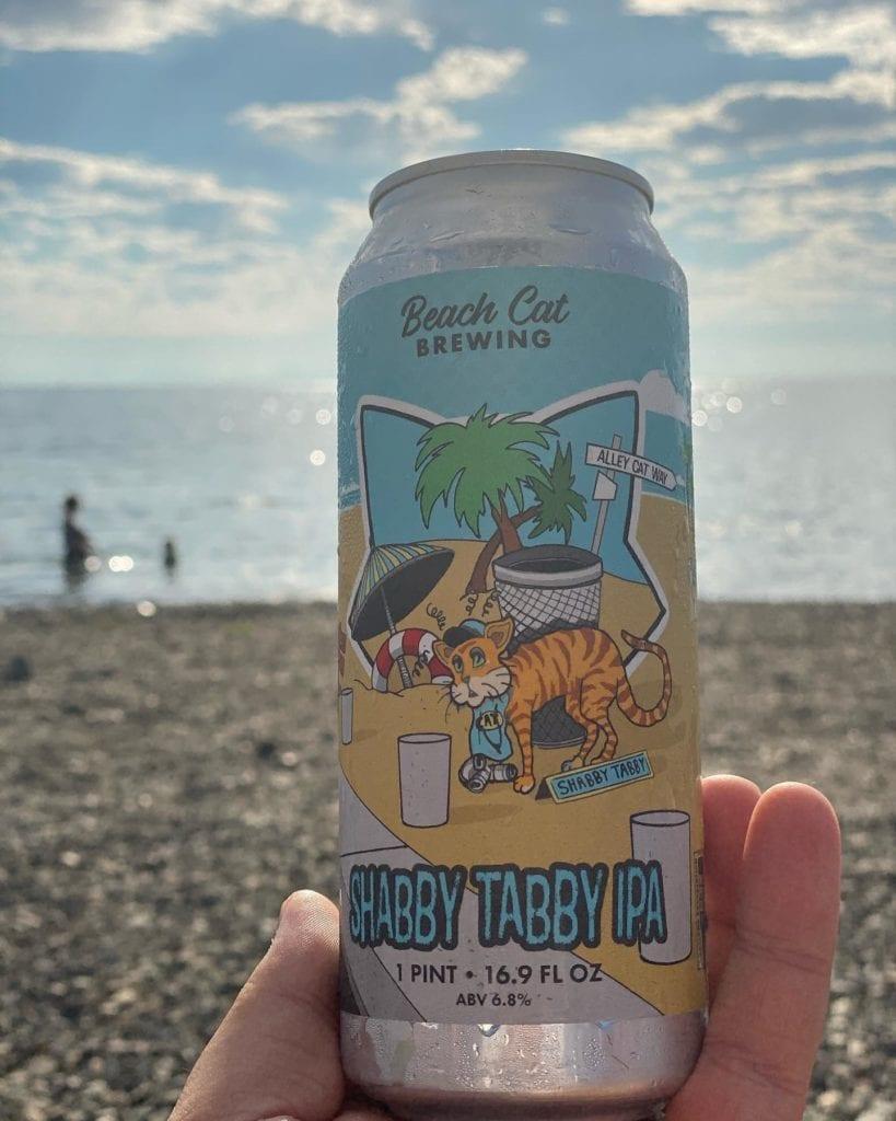 Beach Cat (8)