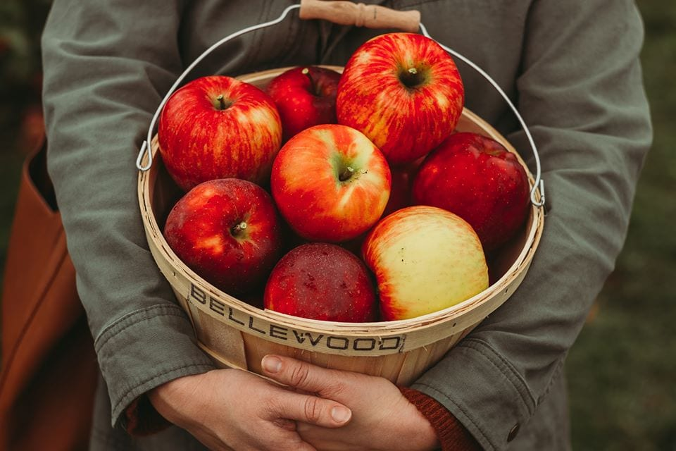 Harvest Happens At Bellewood Farms Lynden Washington Whatcom County Events
