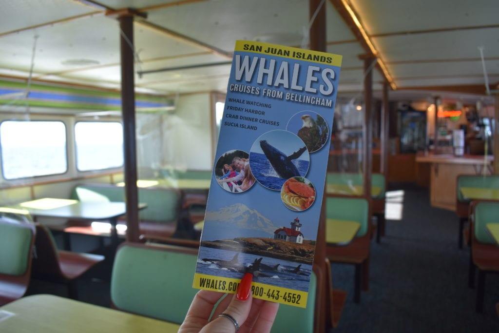 San Juan Cruises Whale Watching Bellingham Washington (99)