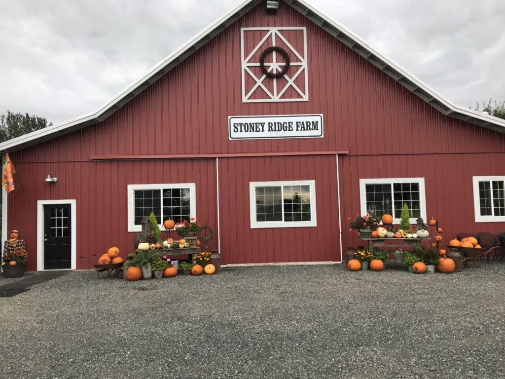 Stoney Ridge Farm Bellingham Wa (5)